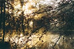 amaneceres (azuloide) Tags: naturaleza delta tigre niebla magia rollo vencido