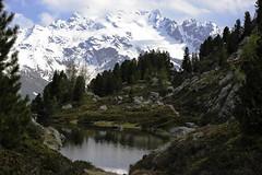CONTRASTI... (lupus alberto) Tags: lago alpi ghiacciaio valvezzola parcodellostelvio cimapiazzi