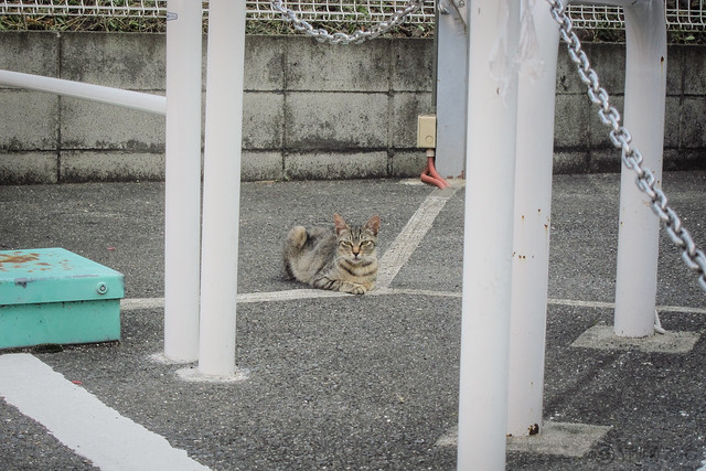 Today's Cat@2013-07-10