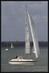 Sea Rose (85) (leightonian) Tags: uk island boat sailing unitedkingdom yacht isleofwight solent gb isle cowes wight iow