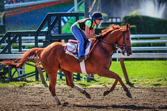 Morning at the Saratoga Racetrack (Samantha Decker) Tags: horse ny newyork racetrack track upstate saratogasprings canonef135mmf2lusm sdny canoneos60d samanthadecker adobephotoshopcs6