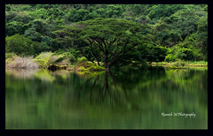 _MG_4232 (Ramesh M Photography) Tags: nature landscape westernghats pollachi valparai landscapephotography greennature solaiyardam indiannaturephotography tamilnadutouristplace keralatouristplace cholaiyardam