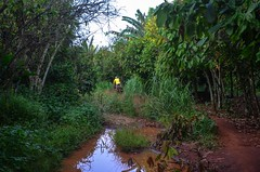 Cycling in cocoa plantations in Cte d'Ivoire (jbdodane) Tags: africa bicycle cycling roads johannes cocoa velo ctedivoire cotedivoire ivorycoast cyclotourisme day293 cycletouring freewheelycom