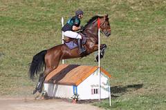 IMG_0012 - Arnac-Pompadour (19) (Lumire-du-matin) Tags: horses horse caballo cross reiter cavalier pompadour pferd corrze chevaux cso eventing quitation haras canon200mmf28l concourscomplet