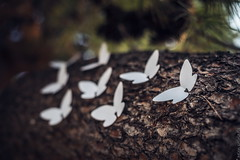 white butterflies in athens (helen sotiriadis) Tags: white art canon butterfly paper published peace action athens greece meld whitebutterfly internationaldayofpeace milanrai canon6d