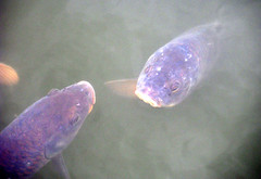 Подводная охота в Самаре 24.10.2013