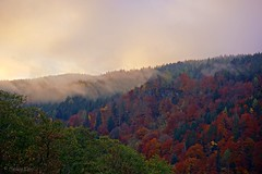Autumn Forest (wigerl - herwig ster) Tags: autumn herbst ossiachersee krnten carinthia bunt colours wald fog nebel sony sonynex7 sel55210 nex7 nex