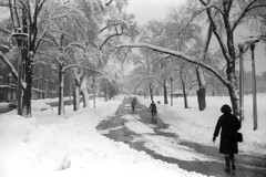 022569 23 (ndpa / s. lundeen, archivist) Tags: park trees winter people blackandwhite bw snow storm 1969 film monochrome boston 35mm ma blackwhite path massachusetts nick snowstorm pedestrians 1960s february common snowfall blizzard bostoncommon beaconhill beaconstreet winterstorm dewolf heavysnow bigsnow coveredinsnow recordsnowfall recordsnow nickdewolf photographbynickdewolf