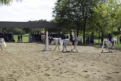 Tempel Lipizzans Final Show 9222013-892 (jkBorys) Tags: horses horse stallions stallion tempel lipizzaner dressage lipizzan lipizzans tempelfarms templelipizzan tempellipizzans templefarms