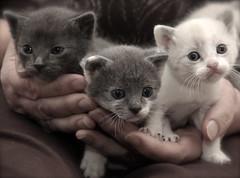 IMG_5755 (Pedro Montesinos Nieto) Tags: cat gatos animales fragile mascotas miradas laedaddelainocencia frágiles