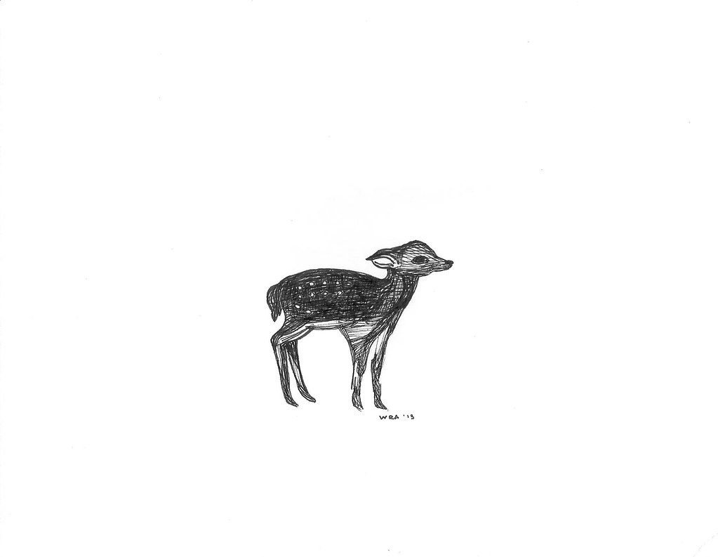 fawn pen ink w rhea tags sketch drawing deer