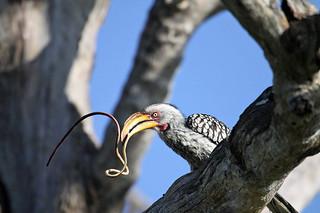 Botswana Okavango Delta Photo Safari 71