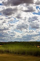 Principio de bosque (Rubn Toquero) Tags: blue sky espaa tree luz clouds canon arbol spain arboles bosque cielo nubes caminodesantiago caminofrances skyblue palencia castillaylen cieloazul erre apostolsantiago cueza tierradecampos ruhey rubntoquerogonzlez rubetoq