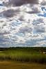 Principio de bosque (Rubén Toquero) Tags: blue sky españa tree luz clouds canon arbol spain arboles bosque cielo nubes caminodesantiago caminofrances skyblue palencia castillayleón cieloazul erre apostolsantiago cueza tierradecampos ruhey rubéntoquerogonzález rubetoq