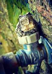(Animals & Clouds) Tags: summer gray hose frog toad treefrog spigot graytreefrog