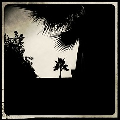 In A Paradise Far, Far Away (k009034) Tags: street old city travel sky blackandwhite plant tree beautiful leaves silhouette landscape photography spain palm retro palmtree phonecamera mobilecamera fuengirola beautifulearth retrocamera flickrandroidapp:filter=narwhal