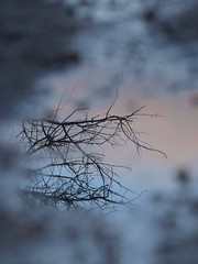 Instant fugitif  ** (Titole) Tags: blue reflection puddle branches reflet flaque friendlychallenges thechallengefactory titole nicolefaton