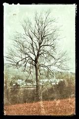 10W2014 Nature en éveil