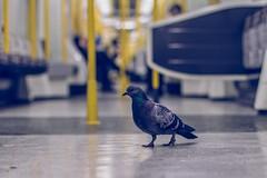 Random commuter