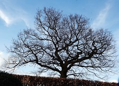 Bare Tree in the Spring (Rhian A) Tags: blue sky tree nature spring branches bark