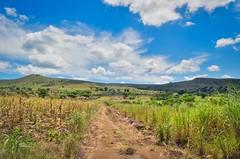 20140221-DSC_9804 (jbdodane) Tags: africa field bicycle cycling corn plantation dirtroad maize velo vlo angola cyclotourisme cycletouring kwanzasul day475 cuanzasul catanda freewheelycom