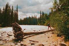 where the rivers meet (Highburnate) Tags: martin alberta canada jasper national park athabasca river crossing fallen tree water conifers coniferous forest beach white sand sandy old 35mm pentax k100 800 kodak color colour nathalie weiswasser analog film highburnate