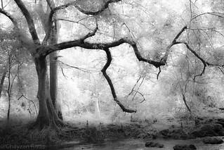 Treeraiser