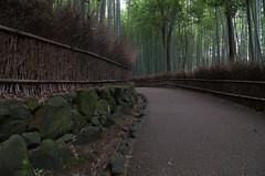 Arashiyama Bamboo Grove 2