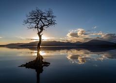 Sunset at Milarrochy (rgcxyz35) Tags: nationalpark scotland tree sunset mountains water reflections sky lochlomond lochs lomondtrossachs starburst clouds