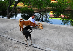 ,, Maintenance 4 Mama ,, (Jon in Thailand) Tags: nun dogs k9 k9s dog rocky mama legs nursenun jungle swamp reflection trees maintenance love road cementroad nikon d300 nikkor 175528 happydogs green pink brown street streetphotography streetphotographyjunglestyle halo