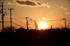 20170309_005_2 (まさちゃん) Tags: シルエット 空 雲 夕暮れ時 鳥 silhouette 夕陽 電柱 電線