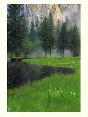 postcard - Yosemite, El Capitan Meadow (Jassy-50) Tags: postcard yosemitenationalpark yosemite nationalpark park unescoworldheritagesite unescoworldheritage unesco worldheritagesite worldheritage whs spring flowers elcapitanmeadow meadow tree yosemitevalley valley