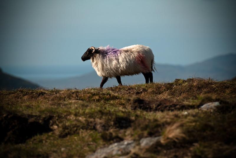 Connemara National Park
