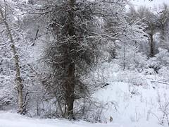 IMG_2225 (augiebenjamin) Tags: winter provocanyon mountains orem provo lindon utah snow clouds trees sky byu brighamyounguniversity art
