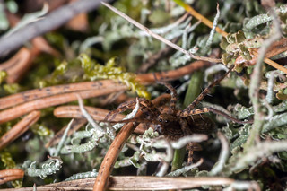 Undergrowth Obstacle Course - _TNY_1406