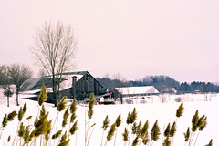 Phragmites (emerge13) Tags: rural oldbarns countryside winter snow farms lépiphaniequébec winterbeauty geotagged
