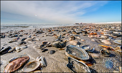 Seashells by the Sea Shore, not for sale (Nikographer [Jon]) Tags: seashells beach atlanticocean sand winter 2016 february nikographer 20160207d810029838 nikon d810