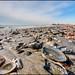 Seashells by the Sea Shore, not for sale (Nikographer [Jon]) Tags: seashells beach atlanticocean sand winter 2016 february nikographer 20160207d810029838 nikon d810