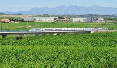 AVE ENTRE VINYES (Andreu Anguera) Tags: ferrocarril tren ave 103 siemens penedès barcelona catalunya andreuanguera