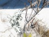 Foliose Lichen 2702 (Tangled Bank) Tags: hypoluxo palm beach county florida coastal scrub forest wild nature natural foliose lichen 2702 plant flora botany