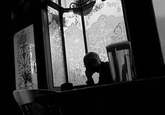 Pub Talk (PM Kelly) Tags: pub silhouette shadow photography man phone talking dark london street grapes bar bnw blackandwhite blackwhite blancoynegro reflection interior x70 windowart