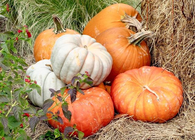 halloween pumpkins orange arrangement