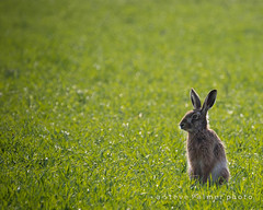 Enjoying the Sun (aMemoryCaptured) Tags: other flikr spring animals places uk norfolk eastanglia