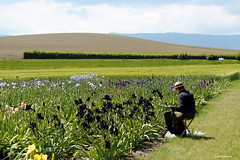 the artist (overthemoon) Tags: flowers iris man gardens painting landscape schweiz switzerland suisse svizzera bucolic vaud romandie 52weeks vuillierens irisgardens 232103 chteaudevuillerens 1j1t wwwjardindesirisch