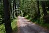 A beautiful road, Bhurban (Ameer Hamza) Tags: trees pakistan classic nature alone emptystreet pristine ppa pakistaniroad treesofpakistan beautifulroadsofpakistan shadedavenue northernarearoads