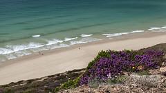Summer colours (Simon Bone Photography) Tags: blue sea seascape green beach water coast sand cornwall purple heather shoreline cliffs coastal coastline torquoise beachscape chapelporth clifftops canonef1740mmlf4 canoneos5dmkii wwwsimonbonephotographycouk