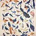 Birds (and some non-avian Animals)