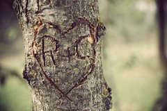 Love (Caissille) Tags: love boyfriend heart c coeur lovers amour r arbre gravure grav