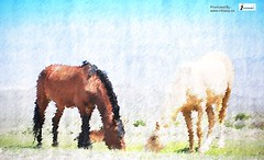 Desert Horse (Infoway LLC - Website Development Company) Tags: beautiful wonderful gorgeous awesome images hd artpaper breathtaking classy websitedesigncompany deserthorse offshorewebdevelopmentcompany incridable