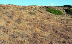 Cam de cavalls.De Mesquida a Es Grao.Ocres. (joseluisgildela) Tags: islas menorca baleares senderos mesquida esgrao camdecavalls